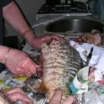 Odstranění šupin z čerstvého kapra jako příprava na následné zamrazení.