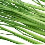 citonová tráva - elixír mládí