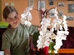 orchidej s 50ti květy