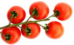šery rajčata