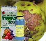 choroby jabloní