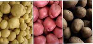 péče o brambory hnojení