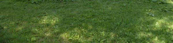 trávník v létě