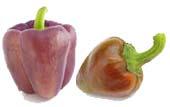 hnědé a fialové papriky