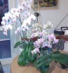 krásné orchideje