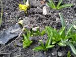 talovín v únoru