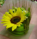dort maly kvetinovy