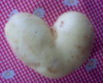 bramborove srdce