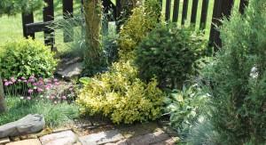 zeleny zahon trvalek
