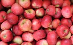 jablka julia