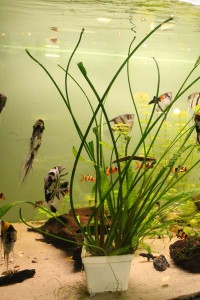 akvarium pro zacatecniky