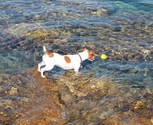 pes v mori