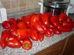 uroda paprik