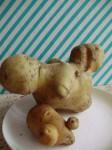 bramborova zviratka