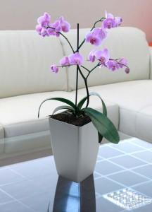 zavlazovani orchideji