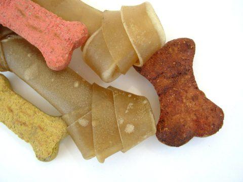 zvykaci kosti pro psy
