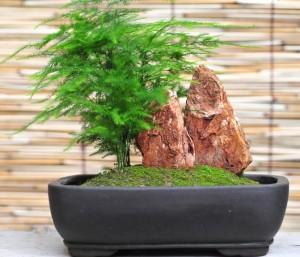 umeni bonsaje