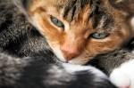 spokojená kočka