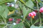 podzimni rostliny