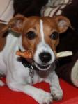 hracky na posileni zubu