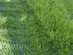 travni rohoz