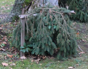 zakryti rostlin chvojim