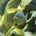 akvarium nahled