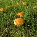 houby nahled