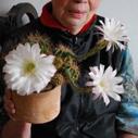 kaktus kvet