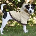 oblecky pes