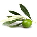 oliva nahled