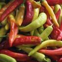 palive papriky