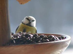 ptak na krmitku
