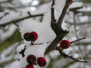 stromy v lednu