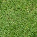 travnik nahled