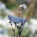 zahrada zima plevel nahled