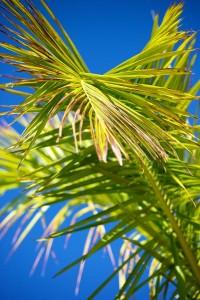 palma ve stredomori