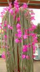 previsly kaktus