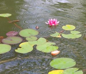 zahradni jezero