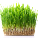 travnik ze semena nahled