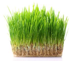 travnik ze semene