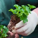 mykorhiza nahled