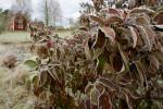 omrzle stromy