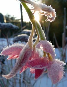 pomrzle rostliny