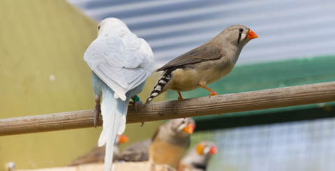 ptaci do maleho prostoru