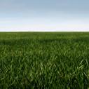 trava nahled
