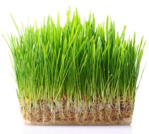 travni koberec