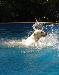 koupani psa v bazenu