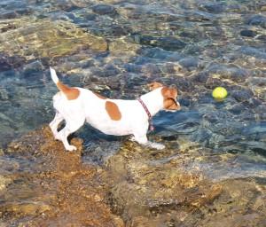 koupani psa v mori