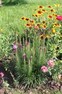 zahony kvetin